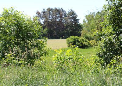 Grand Meadows-218