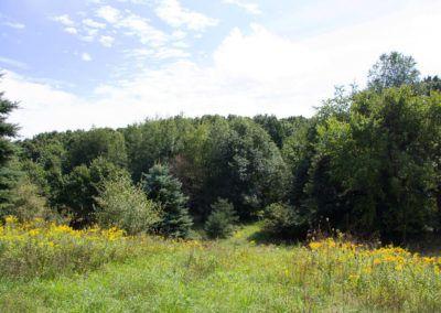 Wolven Ridge-614